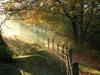 Vign_chemin-blaireau-plus-belle-photo-foret_332502
